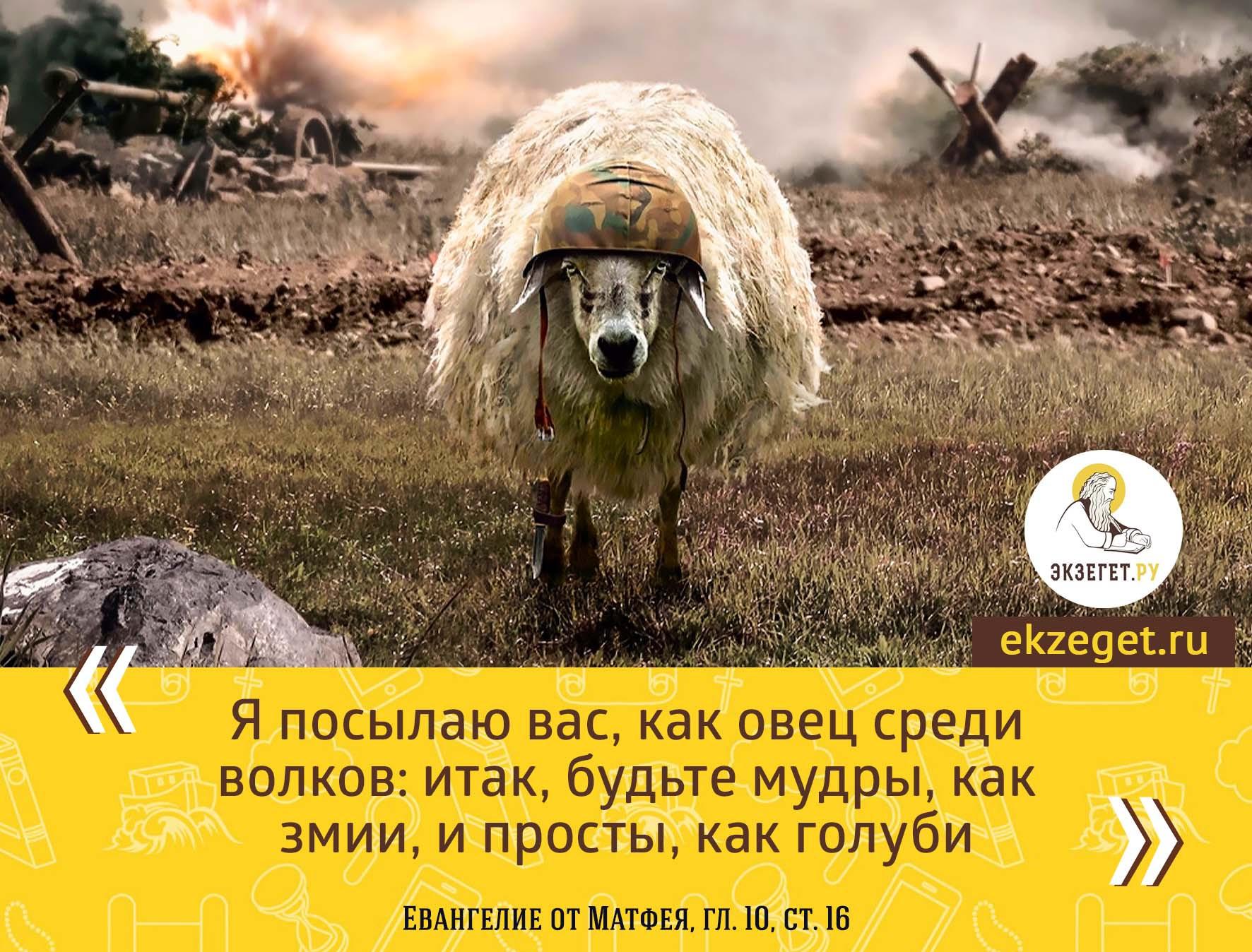 Мф. 10:16 Вот, Я посылаю вас, как овец среди волков: итак будьте мудры, как змии, и просты, как голуби.
